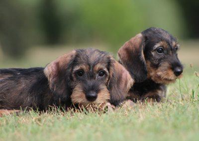 """cuccioli """"E"""" di Casa Mainardi"""