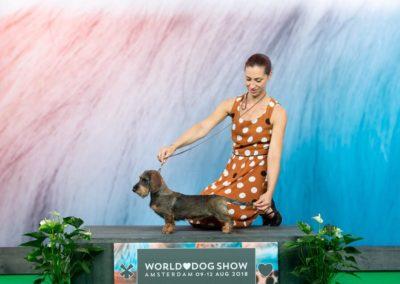 WDS di Amsterdam 2018: O Bella Ciao di Casa Mainardi Puppy World Winner