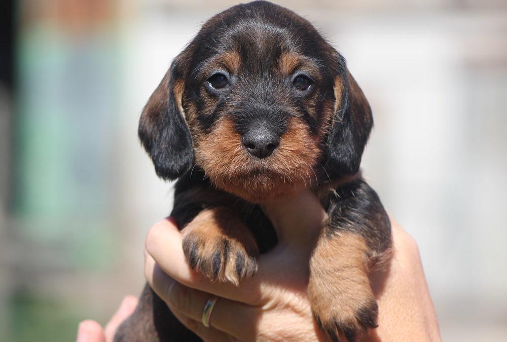 """Le prime foto dei cuccioli """"C"""" di Casa Mainardi"""