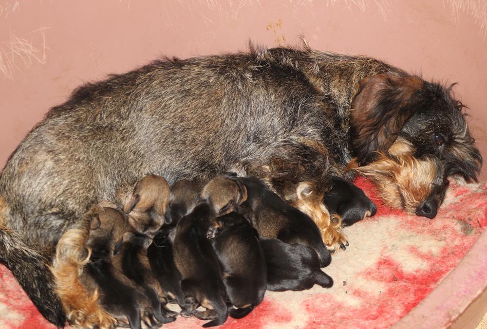 "Ben arrivati cuccioli ""I"" di Casa Mainardi"
