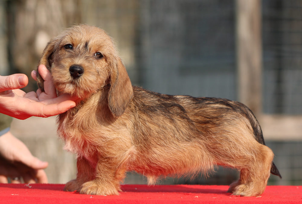 """Nuove foto dei cuccioli """"H"""" di Casa Mainardi"""