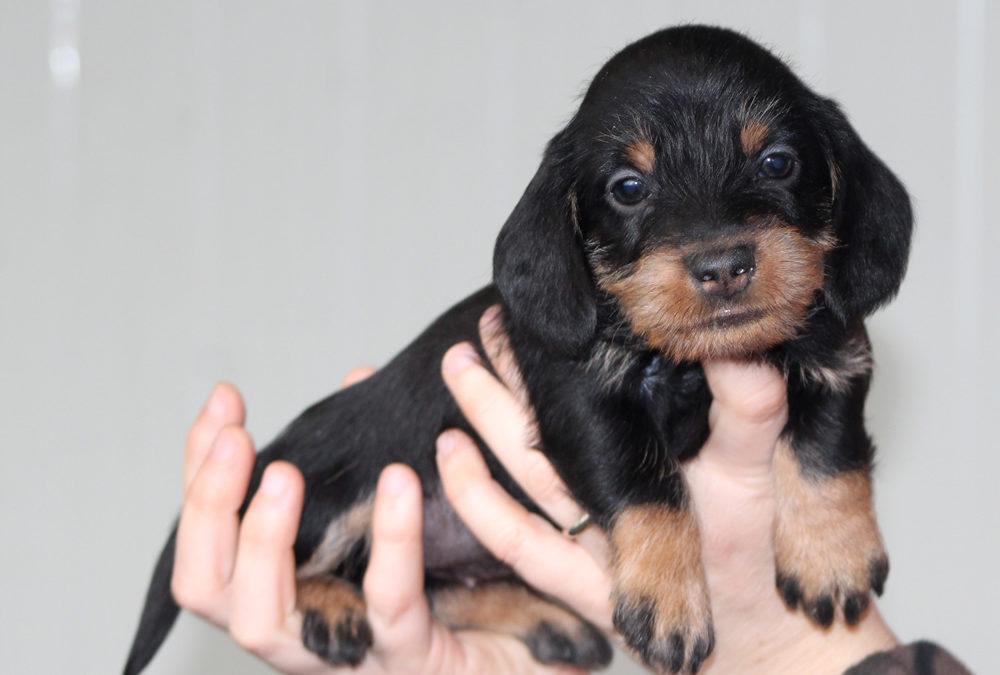 """Nuove foto dei cuccioli """"I"""" di Casa Mainardi"""