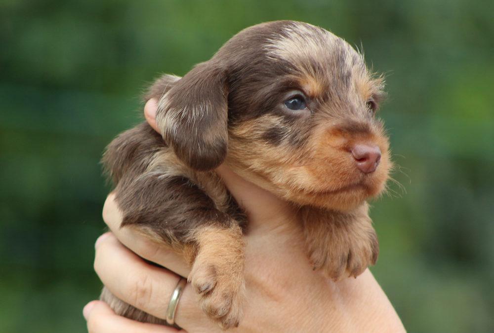 """Le prime foto dei cuccioli """"L"""" e della cucciola """"M"""""""