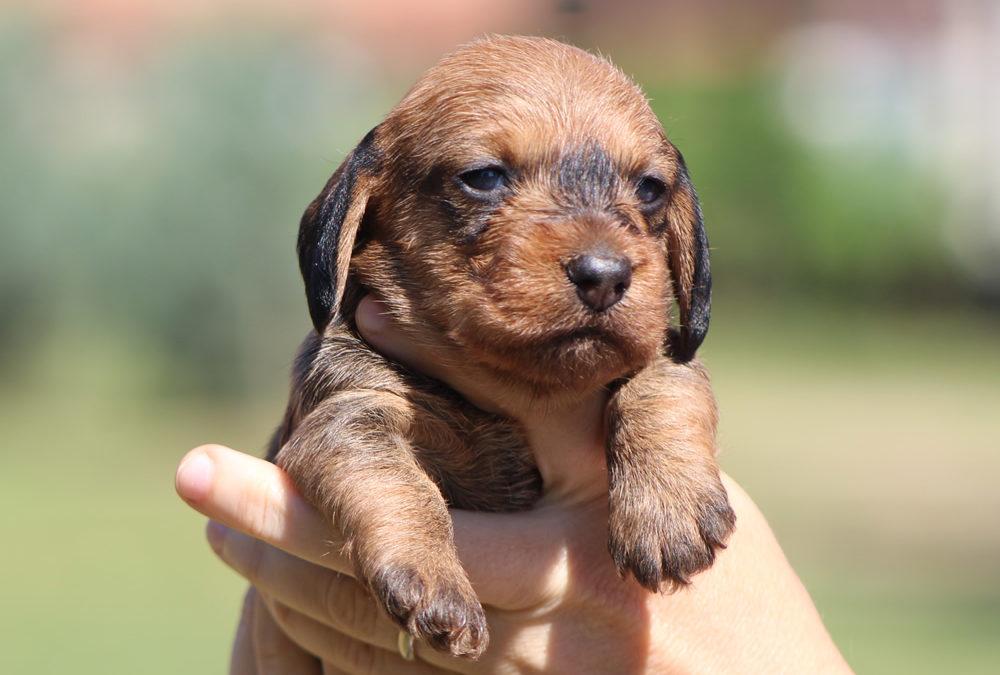 """Prime foto dei cuccioli """"P"""""""