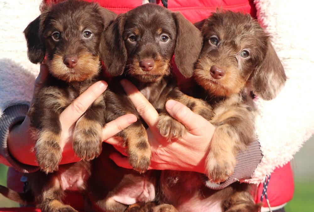 """Cuccioli """"C"""" e """"D"""" di Casa Mainardi"""