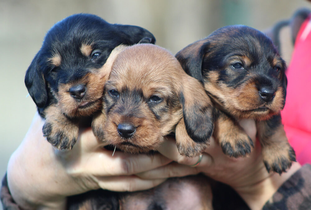"Cuccioli ""H"" di Casa Mainardi"